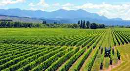 Vineyard Management Services